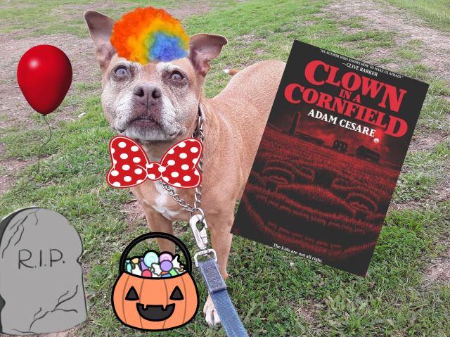 image of clown in a cornfield